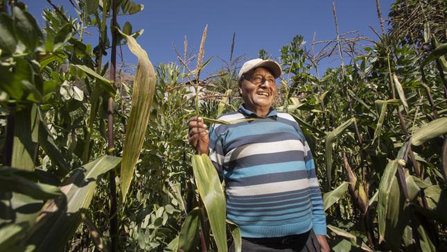 Ver campaña ¡Mayores beneficios laborales a trabajadores del campo!
