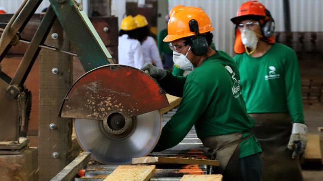 Reanudación de actividades en el sector forestal