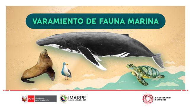 Varamientos de fauna marina