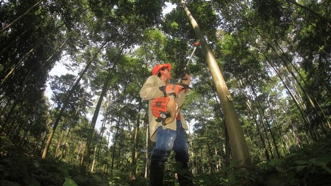 Ver campaña Programa de Financiamiento Directo para Plantaciones Forestales