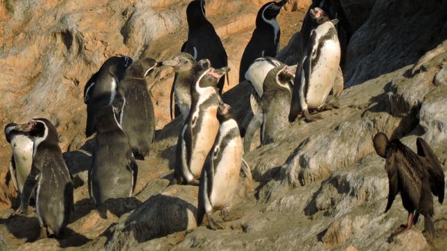 Ver campaña Concurso de becas para investigaciones en las Áreas Naturales Protegidas