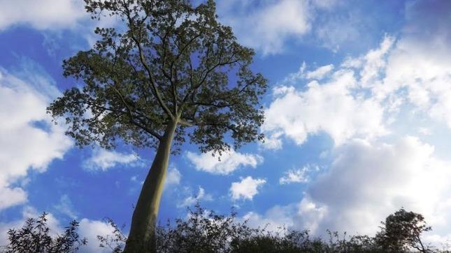 Ver campaña Reconocimiento de Árboles Patrimoniales: Bicentenario Perú