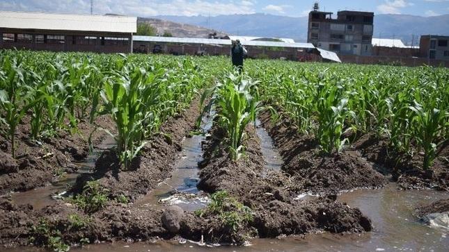 "Ver campaña Charla Virtual: I Modulo ""Buenas practicas agrícolas en maíz amiláceo"""