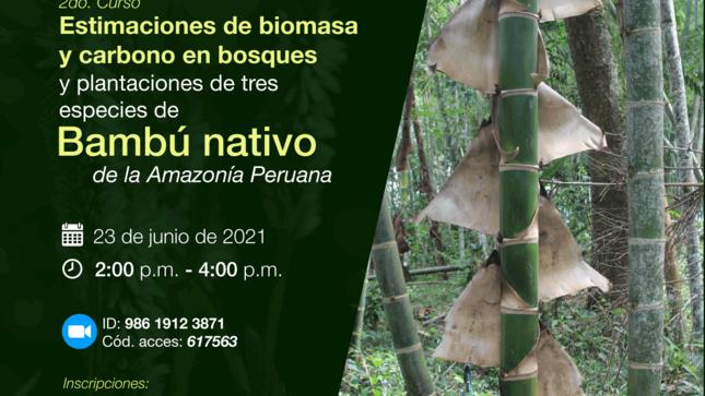 Curso de Bambú