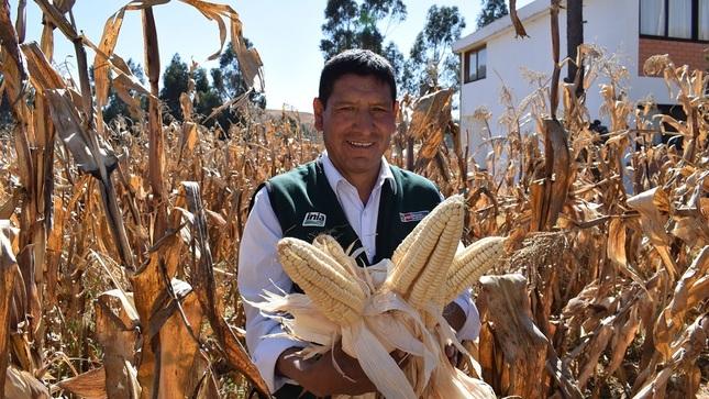 Innovaciones tecnológicas para la producción de maíz amiláce