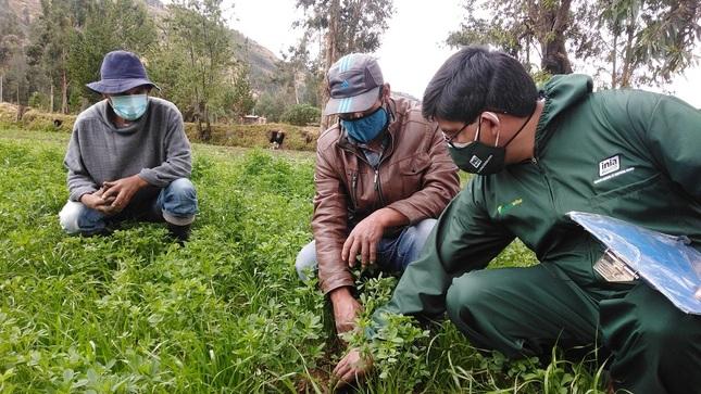 """Módulo """"Clínica de Plantas"""" en Pucará - Huancayo"""