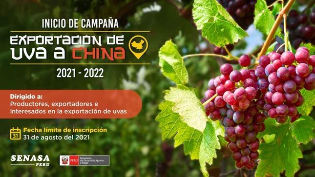 Campaña de exportación de uva 2021-2022