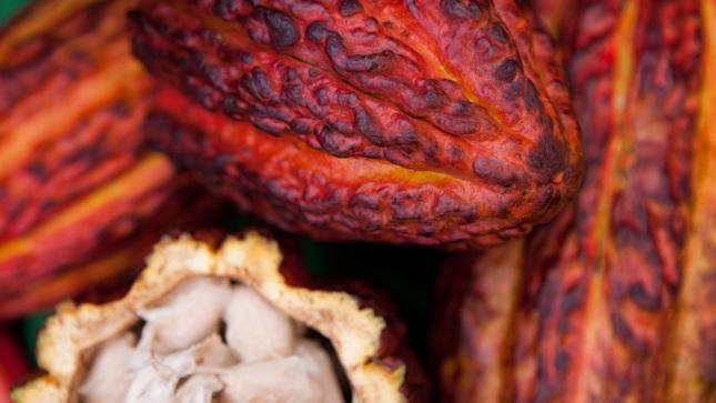 Minagri: Conoce la huella hídrica del cacao