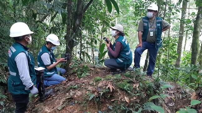 Ante conflicto con jaguar en la selva de Puno SERFOR exhorta a la población a evitar la caza de esta especie