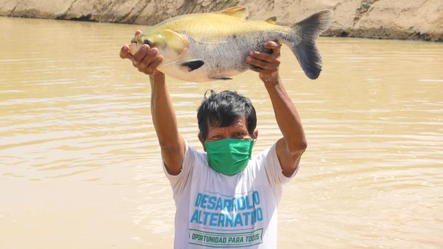 Vraem: inician implementación del primer Centro de Producción de Alevinos de Peces Amazónicos en el distrito de Río Tambo
