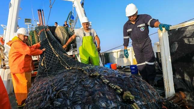 Produce: Primera temporada de pesca de anchoveta culmina el próximo 15 de agosto