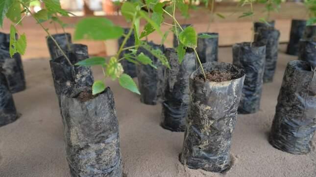 Ucayali: Devida transfiere más de S/900,000 para recuperar más de mil hectáreas de suelos degradados en el distrito de Irazola