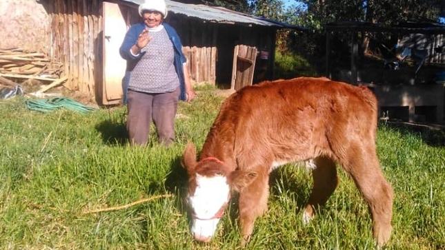 Zarquita es la primera ternera nacida por transferencia de embriones en San Pablo