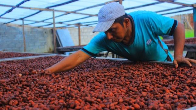 Pasco: Devida y la Municipalidad Distrital de Puerto Bermúdez inician actividad para mejorar 220 hectáreas de cacao