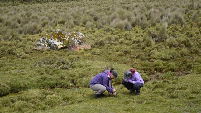 Perú contará con el primer Inventario Nacional de Bofedales