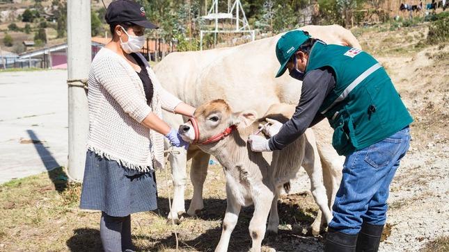 Minagri impulsa el desarrollo de la ganadería familiar protegiendo a animales contra la rabia