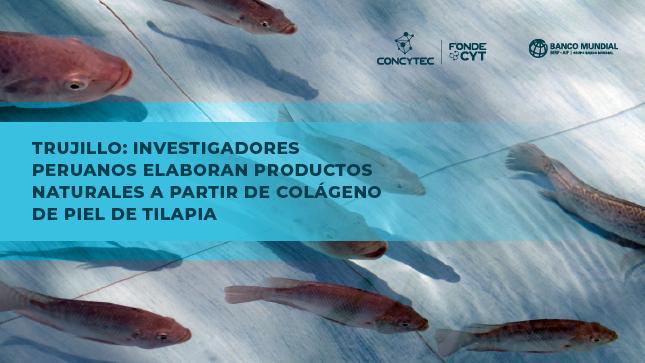 Trujillo: Investigadores peruanos elaboran productos naturales a partir de colágeno de piel de tilapia