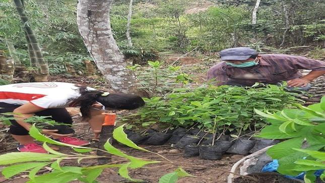 Reforestación en la faja marginal de la quebrada Rumiyacu, sector los algarrobos.