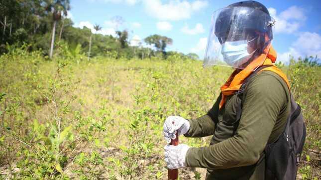 Perú reinicia operaciones de erradicación de cultivos de hoja de coca
