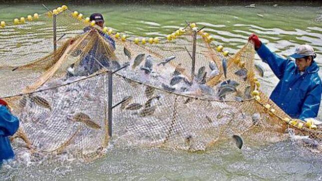 Cerca de 2000 acuicultores podrán certificarse como extensionistas