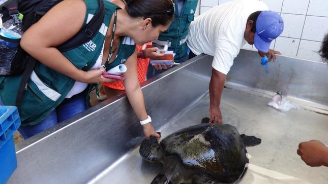 Expertos de Perú, Argentina y Chile comparten experiencias sobre manejo de fauna silvestre marina