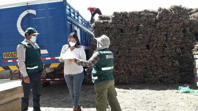 Arequipa: SERFOR transfirió más de 13 mil kilos de thola para comedores del distrito de Quequeña