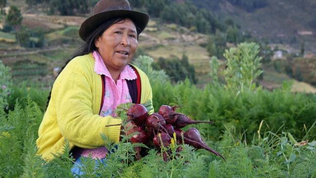 Gobierno exonera el 100% del IGV a fertilizantes para impulsar Agricultura Familiar