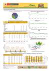 Vista preliminar de documento Boletines de abastecimiento y precio de PAPA - Noviembre 2020