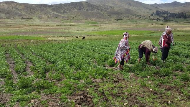 Minagri presenta estudio sobre oportunidades de financiamiento para proyectos agrosostenibles