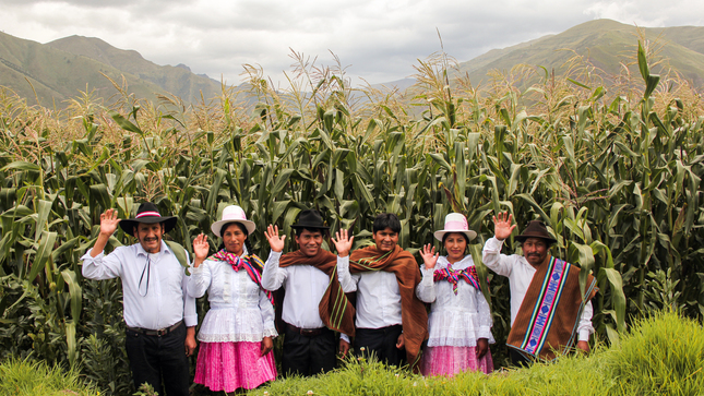 Organización de Cusco duplicó su producción de maíz