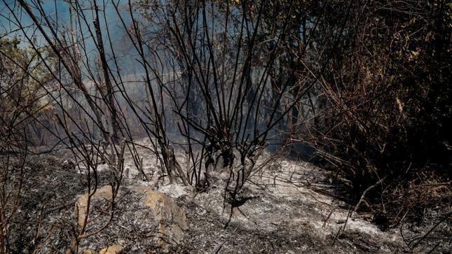 GOBERNADOR REGIONAL EXHORTA A LA POBLACION A NO PROVOCAR INCENDIOS FORESTALES