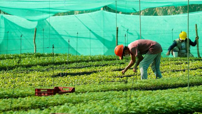 """Ministro Gabriel Quijandría: """"Seguiremos fortaleciendo la reforestación en la Reserva Nacional Tambopata"""""""