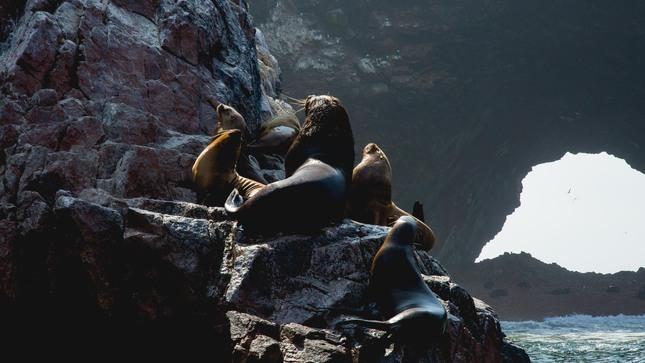 Islas Ballestas reanudarán actividades turísticas