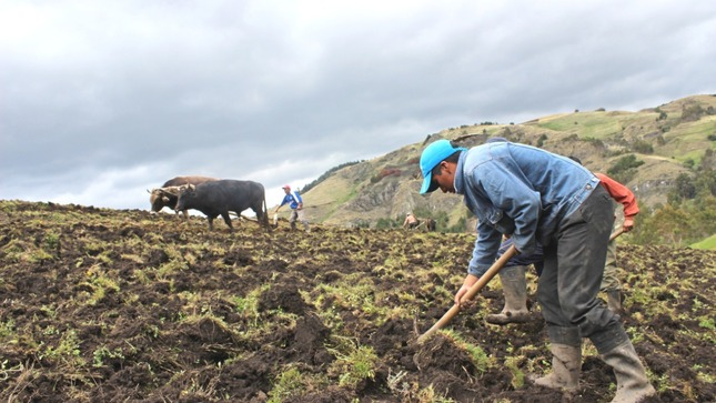 Gobierno fortalece Agricultura Familiar ampliando los alcances del FAE AGRO hasta junio de 2021