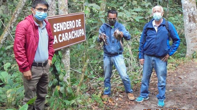 Sueltan 2 carachupas o armadillos en el Morro de Calzada