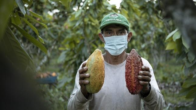 MIDAGRI: Plan de Negocio de agricultores de Huánuco potenciará producción de cacao