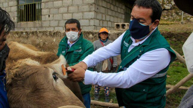 Ganadería familiar: SENASA inicia identificación de animales de abasto en Junín