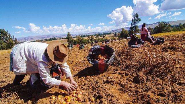 Ministro Tenorio: Con sólo Declaración Jurada, productores de Agricultura Familiar accederán a evaluación de créditos del FAE-AGRO