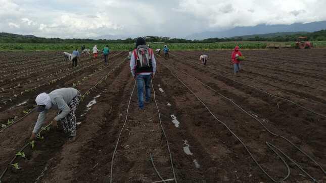 SUNAFIL y Cámara de Comercio, Producción y Turismo de San Martín instalaron mesa de trabajo descentralizada