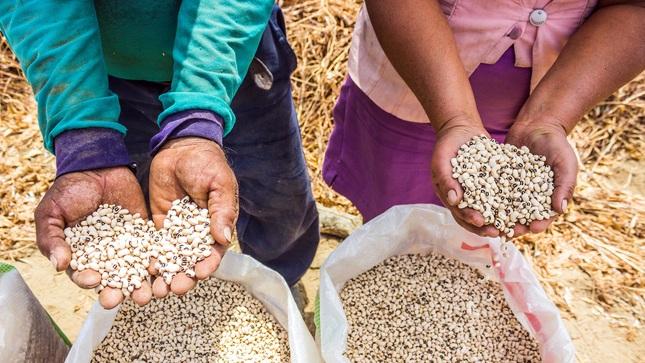 MIDAGRI genera más de 30 variedades de legumbres con alta calidad genética