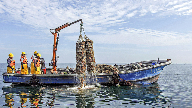 Conchas de abanico peruana llegarán a los Emiratos Árabes Unidos