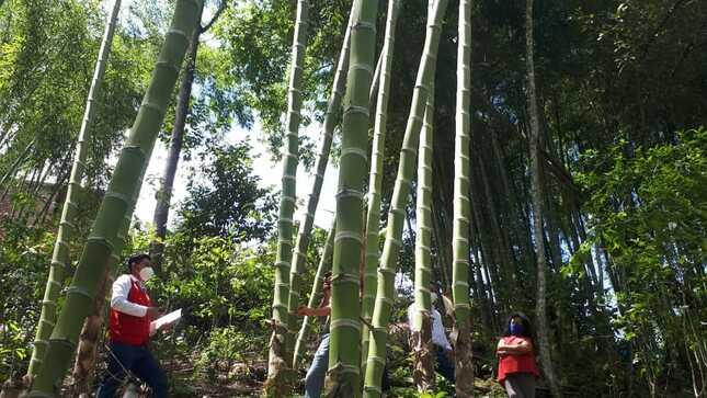 Gore Piura realiza coordinaciones para impulsar cadena productiva de bambú