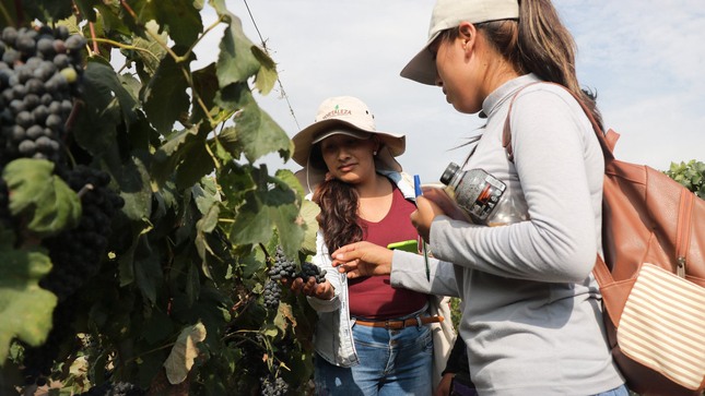 Fortalecerán sector agroindustrial de Ica a través de proyectos de Investigación, Innovación y Emprendimiento
