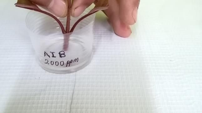 Desarrollo de protocolos para la multiplicación clonal del árbol de la quina (cinchona sp.)