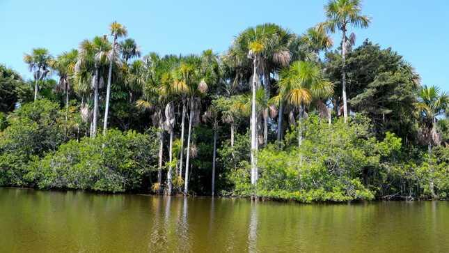 La conservación del ambiente para asegurar el bienestar de la población es una prioridad del Minam