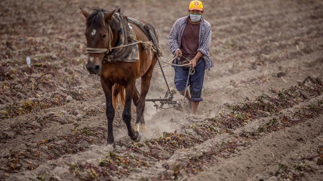 MIDAGRI: Adjudicación de garantías del FAE-AGRO permitirá inyectar capital de trabajo a pequeños productores agropecuarios
