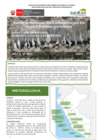 Vista preliminar de documento Reporte Mensual De Conservación En Islas Y Puntas Guaneras - Enero 2021