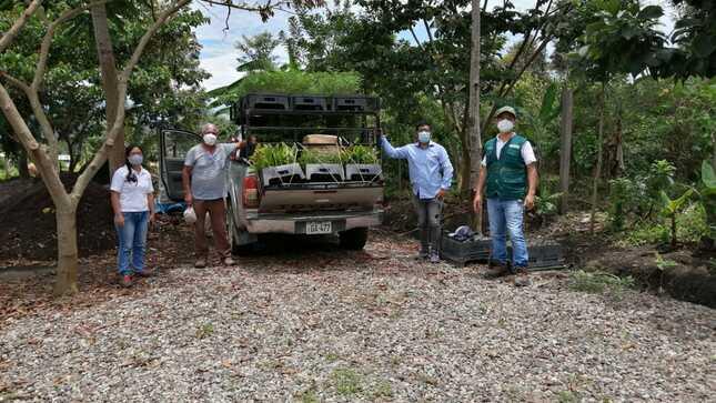 MIDAGRI y el PEJSIB continuan con la siembra de plantones forestales en 06 distritos de la Provincia de Bagua