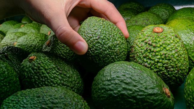Productores de palta de la zona del VRAEM en Huancavelica venden más de 90 toneladas de la variedad Hass para exportación