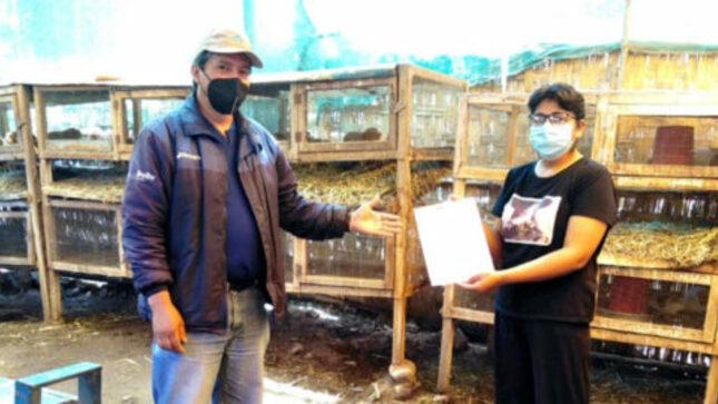 Áncash: Productores de cuyes del valle fortaleza certifican sus competencias